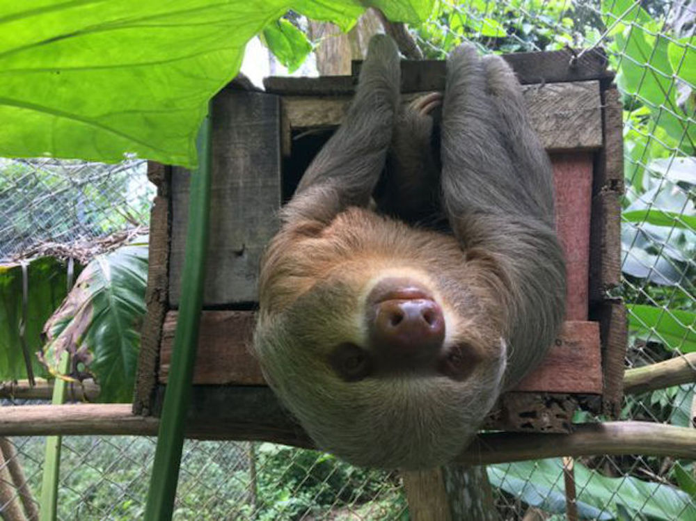 Pilpintuwasi: Six Week At An Animal Rescue In The Amazon Jungle