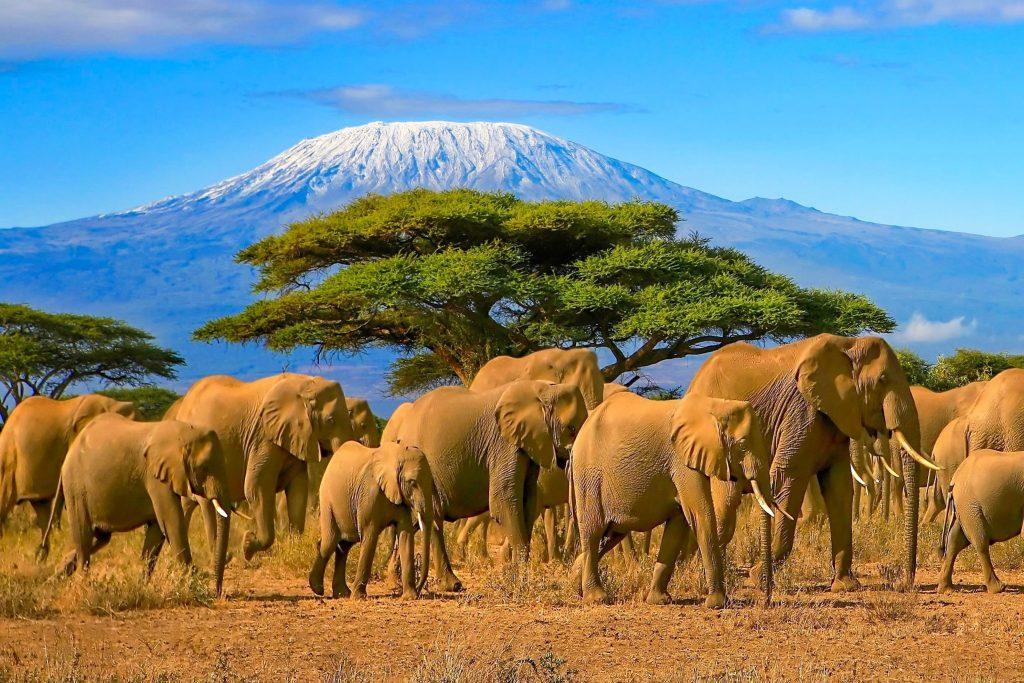 Kilimanjaro Routes: An Expert Breakdown