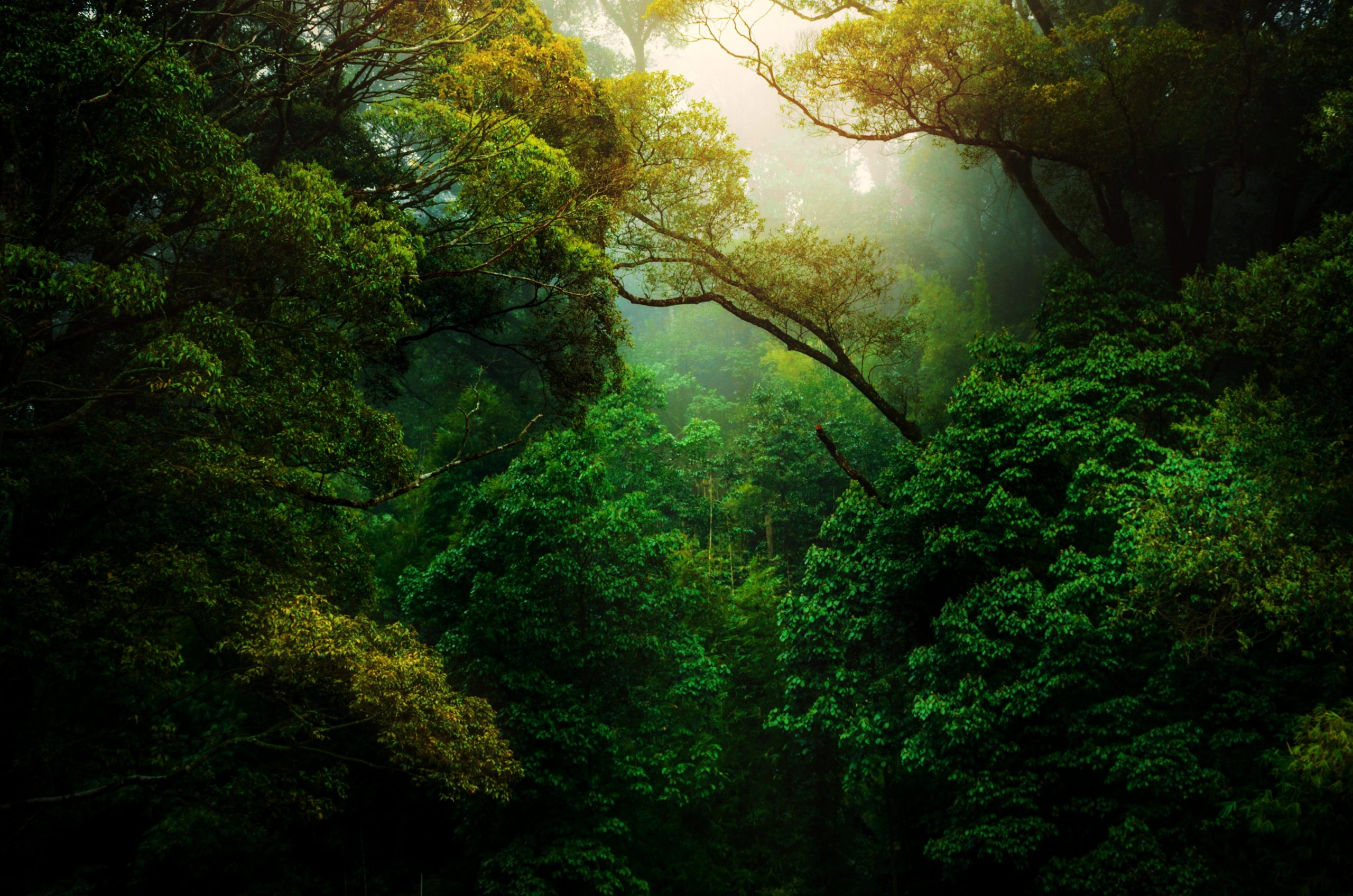 sunlight coming through the trees of a rainforest