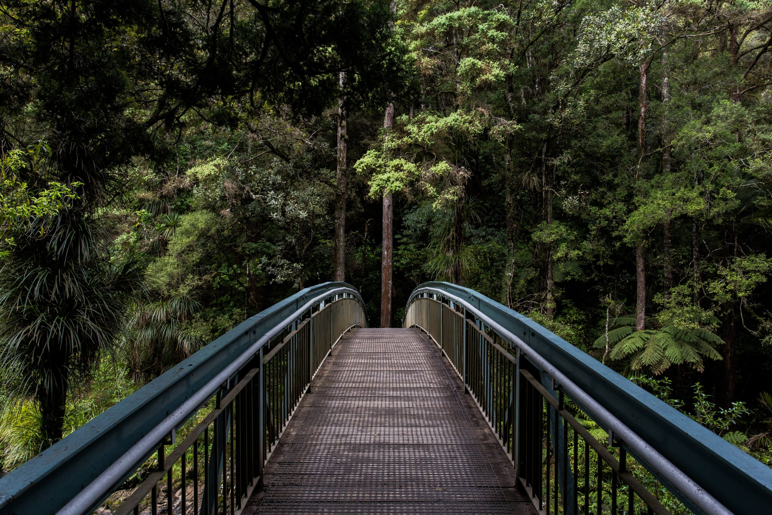 bridge going into a pine forest