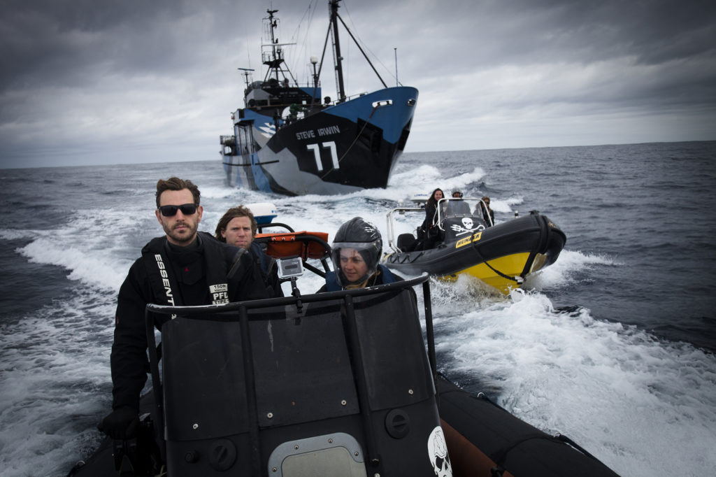 GoKo Travels Is Now A Proud Partner of Sea Shepherd